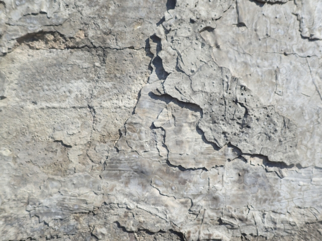 Free Cement Texture -04-09-2016-0017