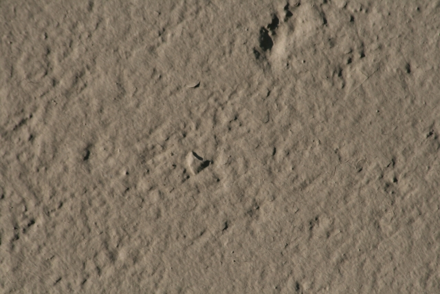 Free Cement Texture 01-09-2015 00002