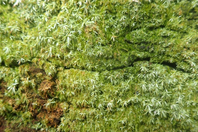 Free Moss Texture -01-03-2016-0001