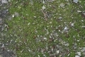 Free Moss Texture 09-05-2015 00002