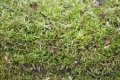 Free Moss Texture 09-05-2015 00004