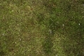 Free Moss Texture 09-05-2015 00005