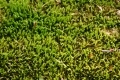 Free Moss Texture 09-05-2015 00007