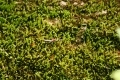 Free Moss Texture 09-05-2015 00008