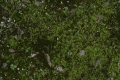 Free Moss Texture 09-05-2015 00011