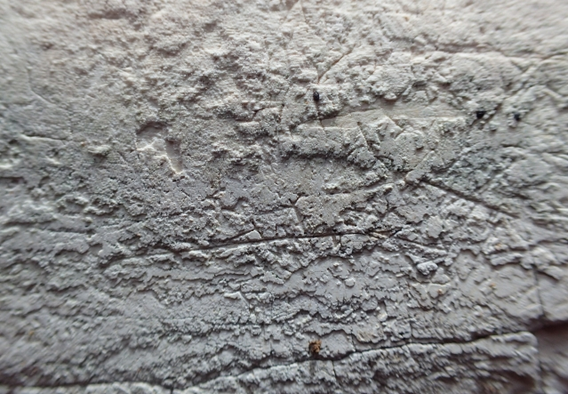 Free Rock Texture -03-03-2016-0053