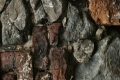 Free Rock Texture 14_02_2011 003