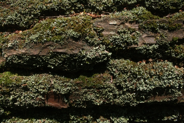 Free Texture Moss 24-05-2014 00006 - IMG_0707