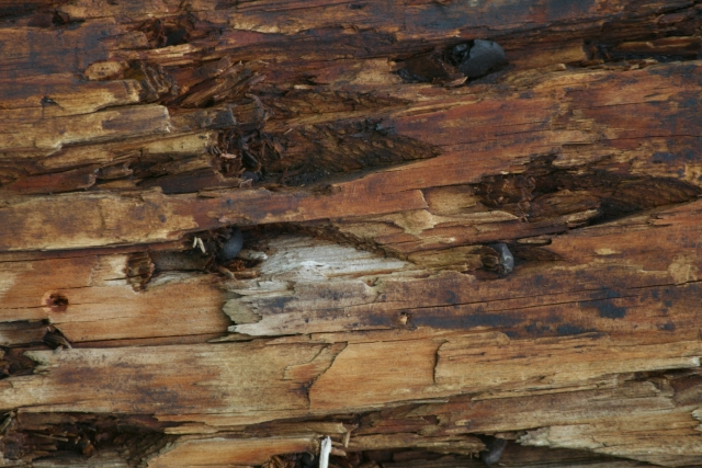 Free Texture Wood 2010_08_04_10
