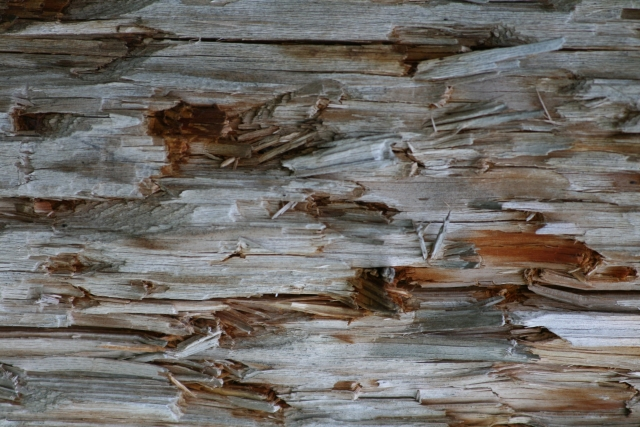 Free Texture Wood 2010_08_04_11