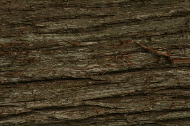Free Texture Wood 2010_08_04_14