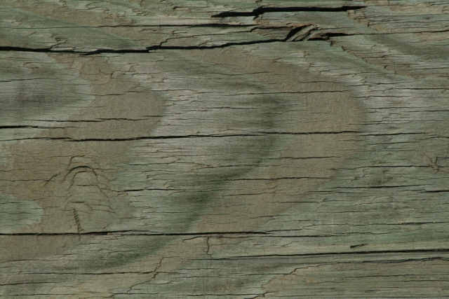 Free Texture Wood 2010_08_26_17