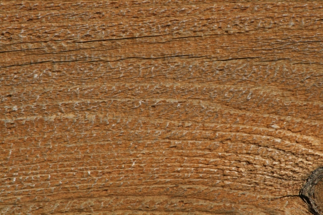 Free Texture Wood 2010_10_01_07