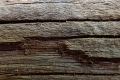 Free Wood Texture -24-05-2016-0001