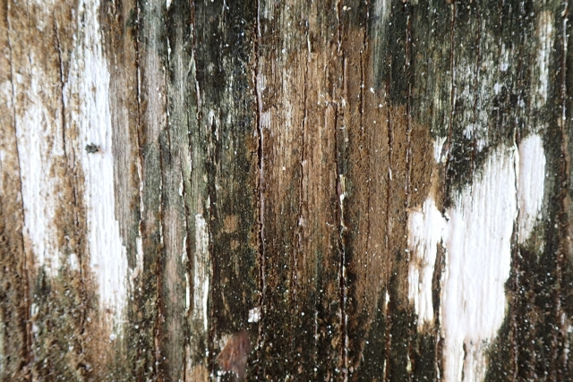 Free Wood Texture -25-02-2016-0015