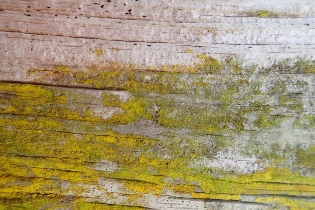 Free Wood Texture -28-02-2016-0035