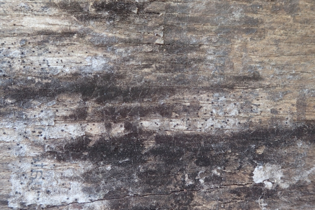 Free Wood Texture -28-08-2016-0010