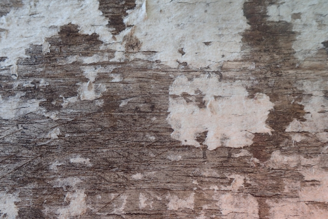 Free Wood Texture -28-08-2016-0013