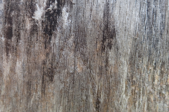 Free Wood Texture -28-08-2016-0014