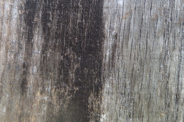 Free Wood Texture -28-08-2016-0015