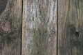 Free Wood Texture -30-12-2015-0022