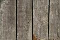 Free Wood Texture 01-09-2015 00004