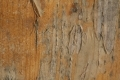 Free Wood Texture 01-09-2015 00016