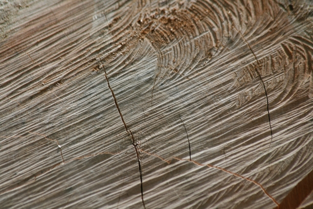 Free Wood Texture 09-05-2015 00001