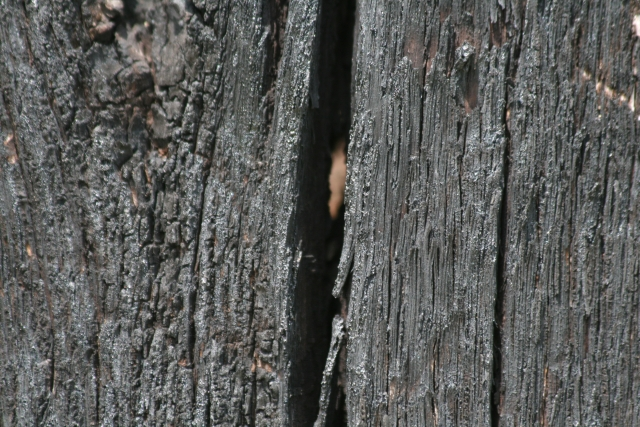Free Wood Texture 09-05-2015 00007