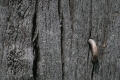 Free Wood Texture 09-05-2015 00008