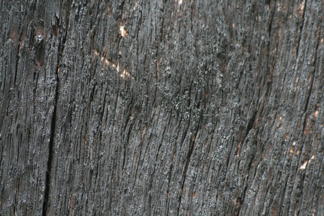 Free Wood Texture 09-05-2015 00013