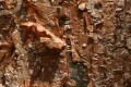 Free Wood Texture 14_02_2011 001