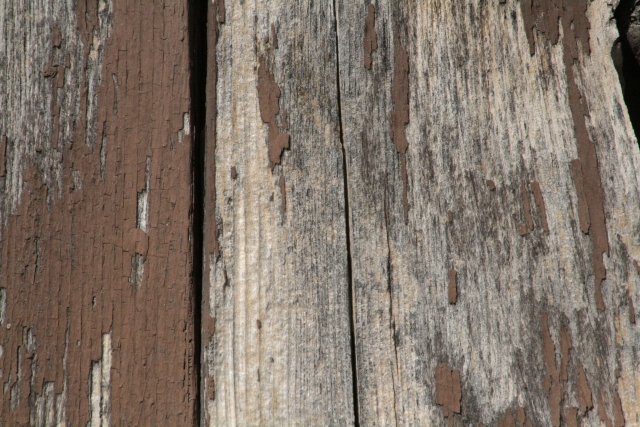 Free Wood Texture 17_10_2010 001