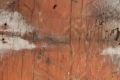 Free Wood Texture 21_11_2010 003