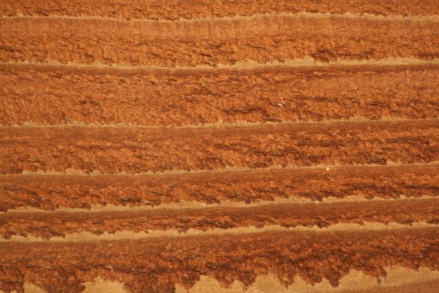 Free Wood Texture 23_10_2010 003