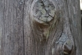 Free Wood Texture 27-02-2013 0013