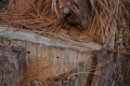 Free Wood Texture 27-02-2013 0023