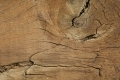 Free Wood Texture 29-03-2015 00009
