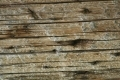 Wood_Texture_2010_08_01_05
