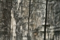 Wood_Texture_2010_08_01_06