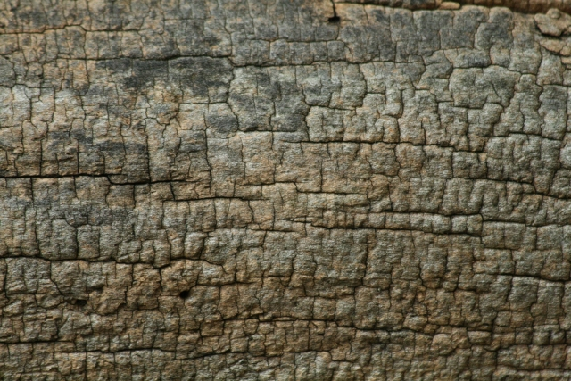 Wood_Texture_2010_08_01_23