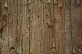 Wood_Texture_2010_08_01_31